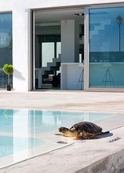 Piscina de microcemento blanco en casa minimalista blanca con tortuga.
